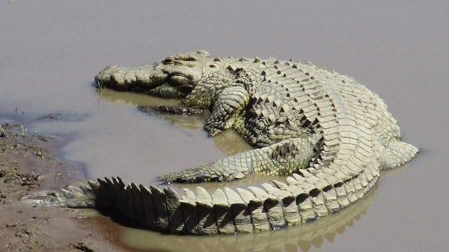 ВАвстралии крокодил напал наохотников