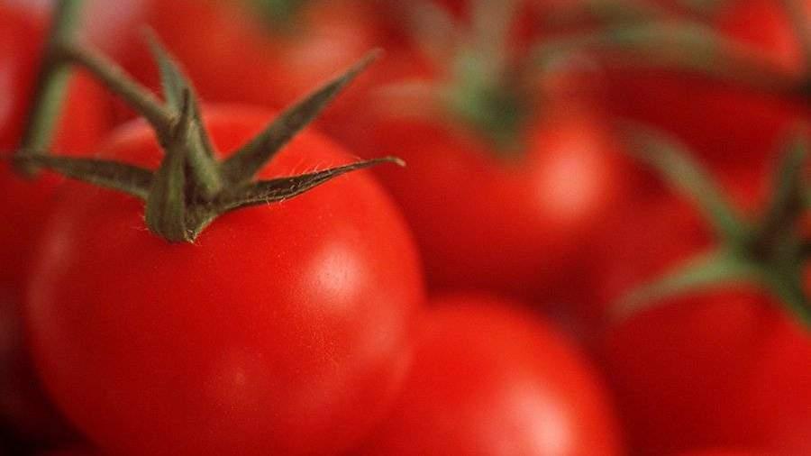 РФ вновь подозревает Беларусь вреэкспорте турецких помидоров