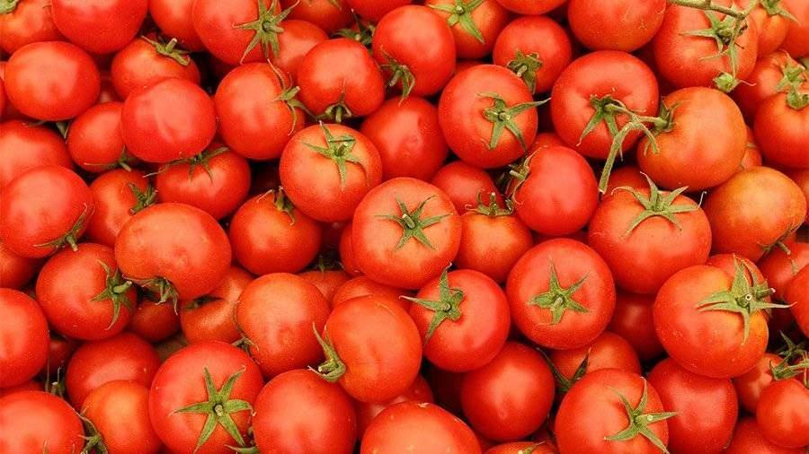 Турция возобновила поставки томатов в Российскую Федерацию