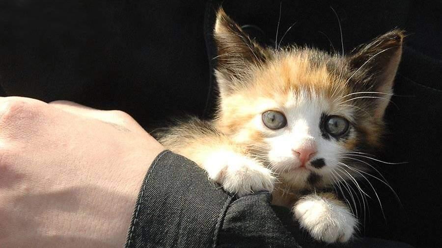 Столичные полицейские вызволили котенка измашины ГИБДД