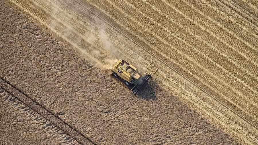 Экспорт пшеницы из Российской Федерации вырос практически начетверть