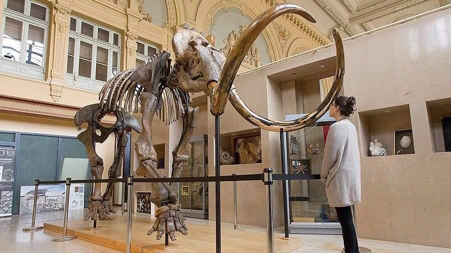 Скелет мамонта изСибири продали воФранции практически за €550 тыс