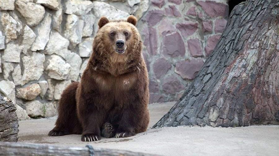Медведи, сурки итушканчики вМосковском зоопарке впали вспячку