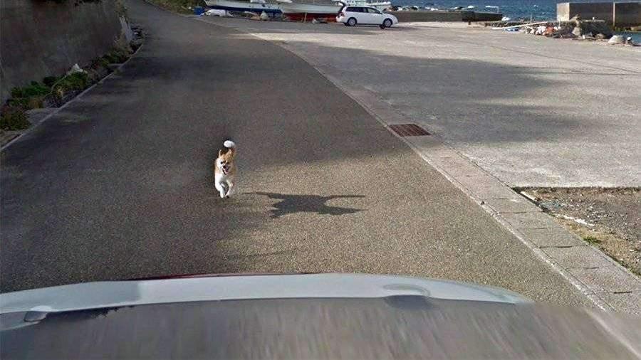 Пес преследовал автомобиль Google Street View в Японии