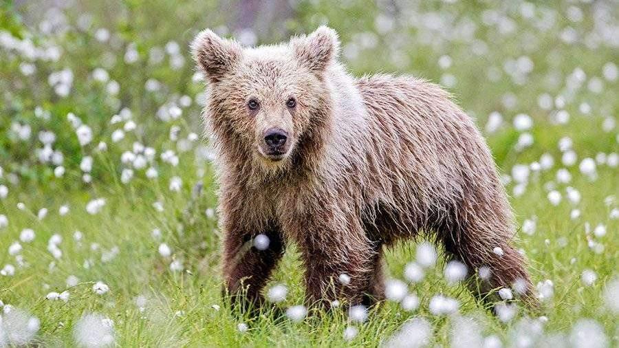 """Результат пошуку зображень за запитом """"медведь"""""""