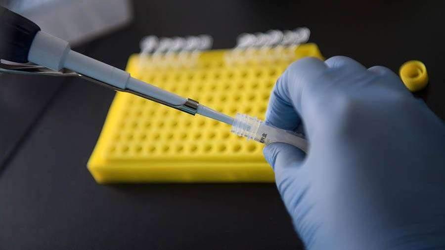 В Японии одобрили создание гибридов человека и мыши