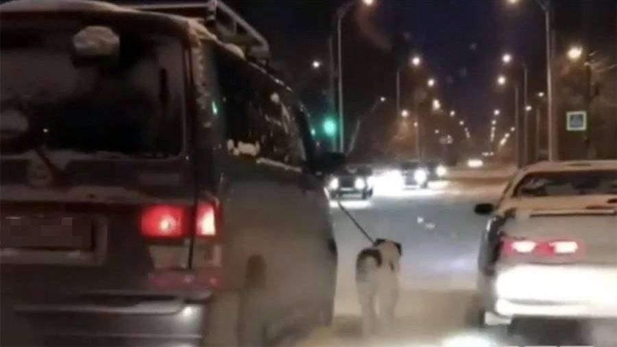 Полиция проверит видео с привязанной к машине хромой собакой