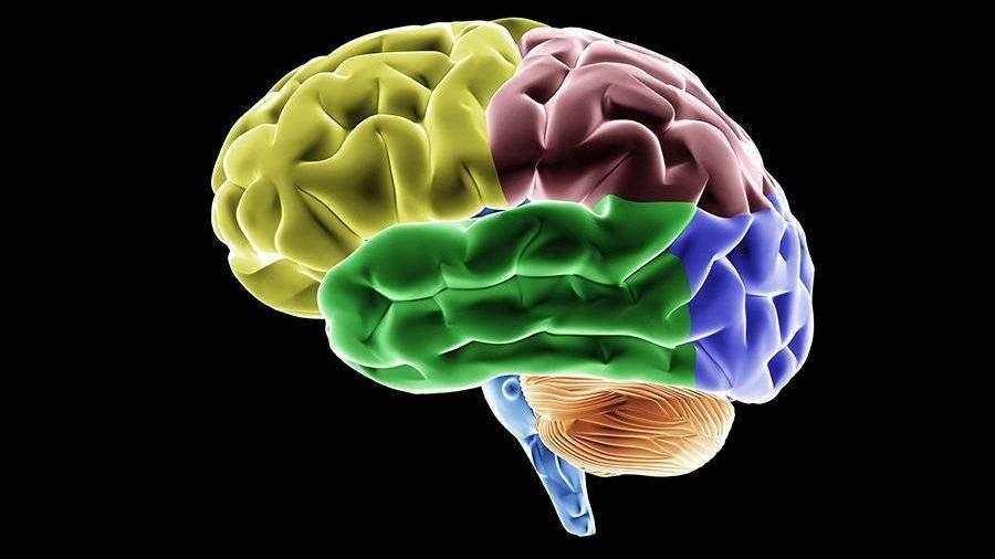 Мозг полярников уменьшился после 14 месяцев в Антарктиде