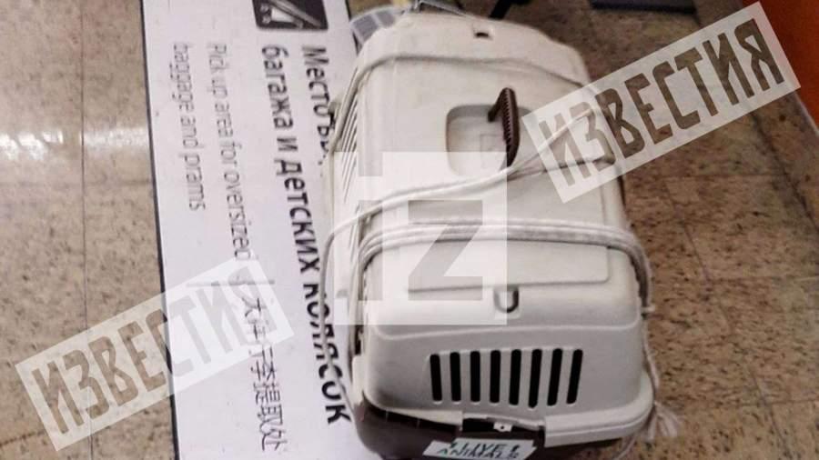 Две кошки погибли при транспортировке в московском аэропорту Шереметьево