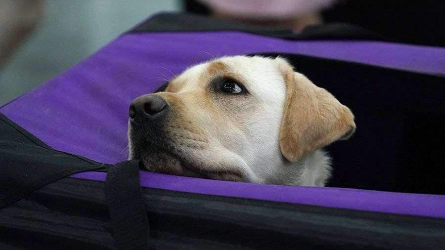 В Госдуму внесут проект о запрете изъятия домашних животных за долги