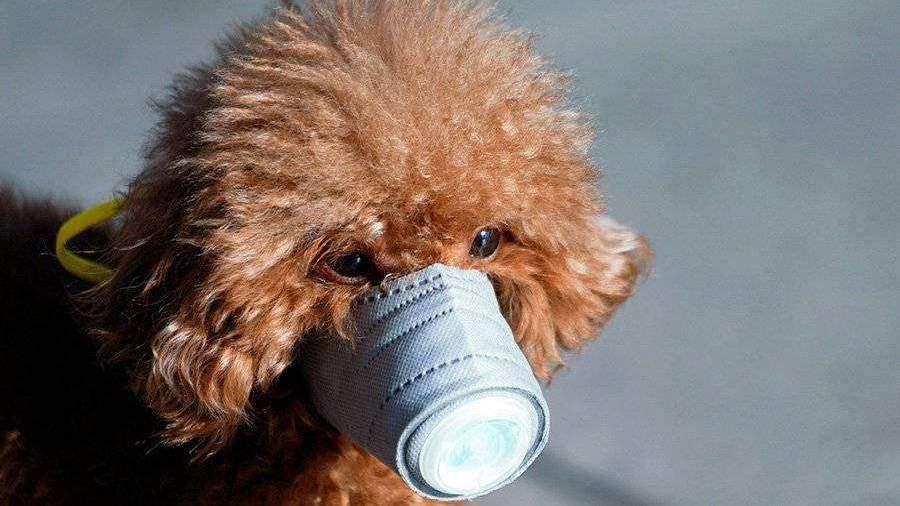 коронавирус у собак анализ