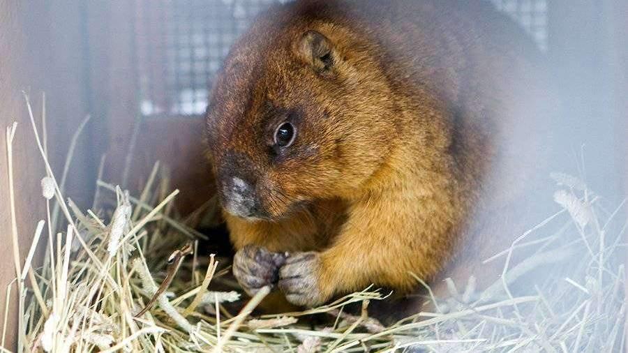 В Ленинградском зоопарке из-за аномального тепла проснулись сурки