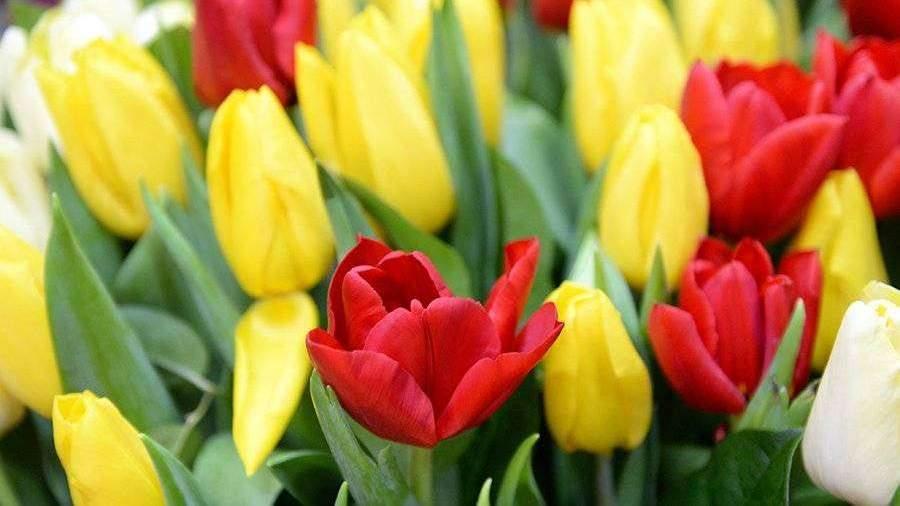 Эксперты посоветовали продлять жизнь цветов газировкой