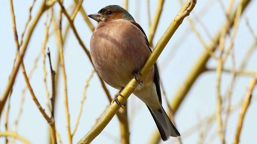 В России предсказали увеличение потомства птиц из-за теплой весны