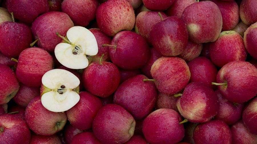 Диетолог рассказала о правильном употреблении яблок