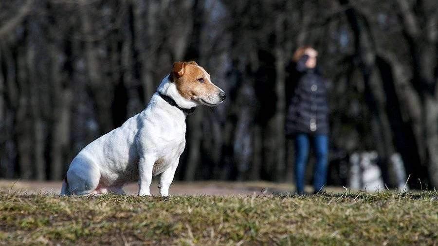 Мэр Якутска ответила на критику ее идеи о налоге на домашних животных