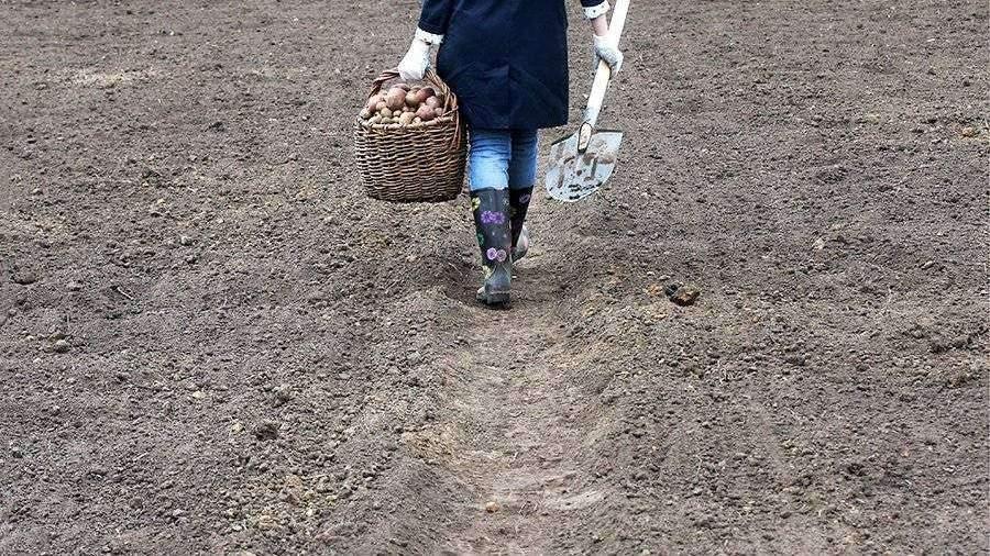 Вильфанд посоветовал не менять сроки посадки картошки из-за теплой погоды