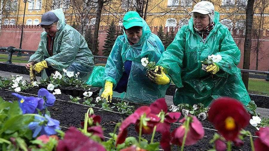 Более 52 млн цветов украсят Москву в 2020 году