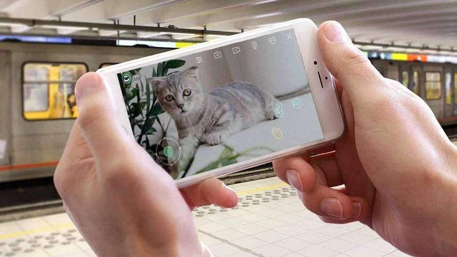 В Москве создали сервис для виртуального общения с животными из приютов