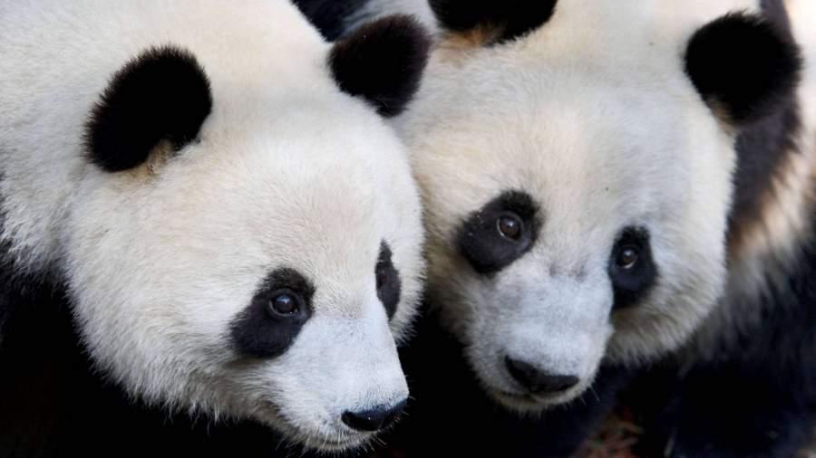 Ученые сообщили о более долгой жизни самок большинства млекопитающих