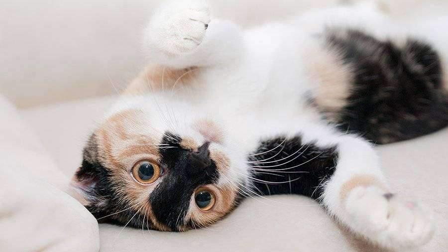 Ученые рассказали об успокаивающей кошек музыке