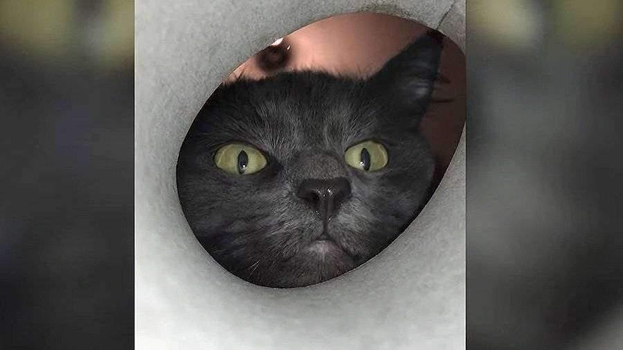 В интернете набирает популярность ролик с любопытным котом из Сибири