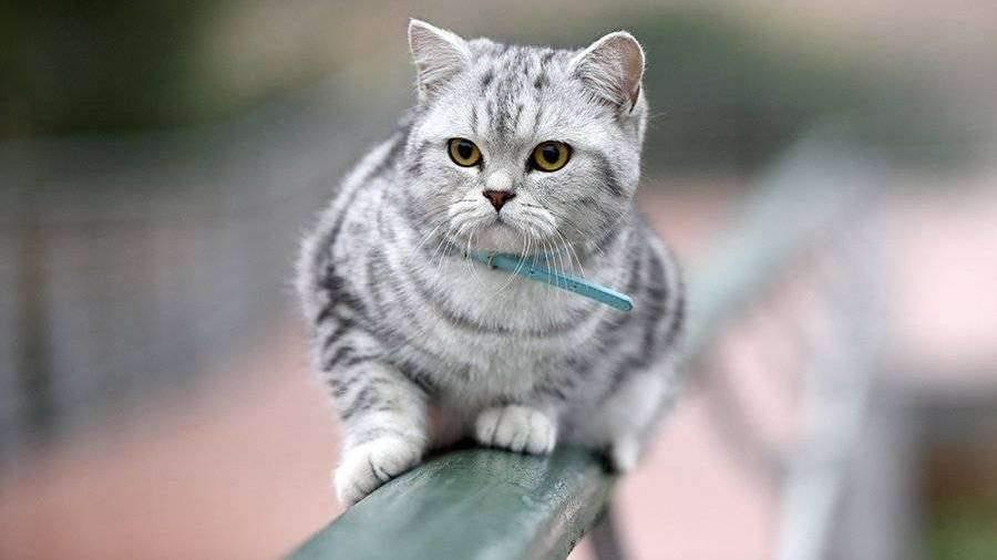 Ученые обнаружили коронавирус у кошек в Ухане