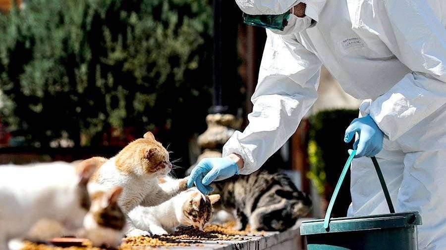 ВОЗ изучат передачу коронавируса от домашних животных к человеку