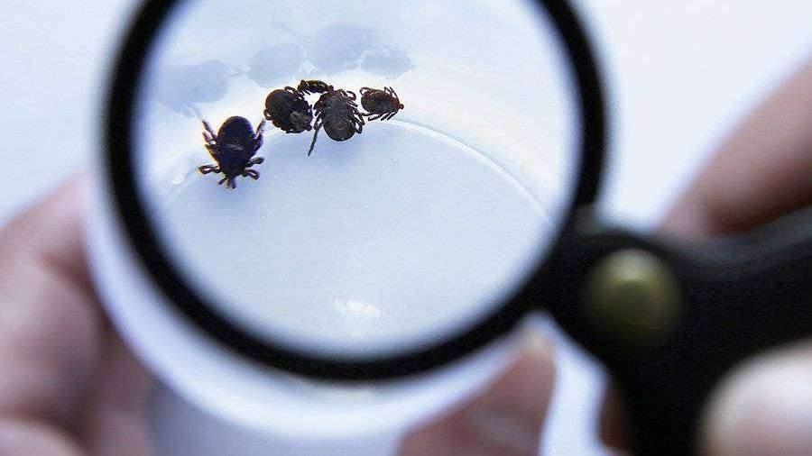 В Томской области откроют дополнительные медцентры из-за укусов клещей