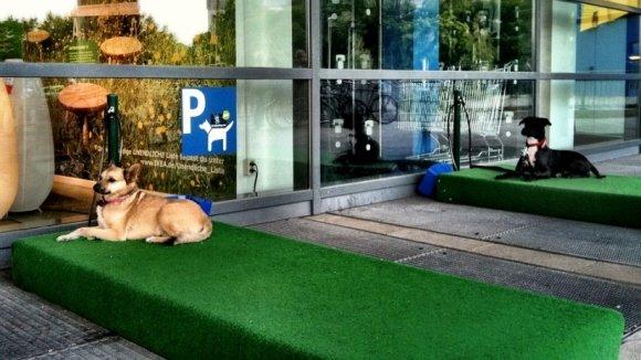 В Москве появятся «парковки» для собак