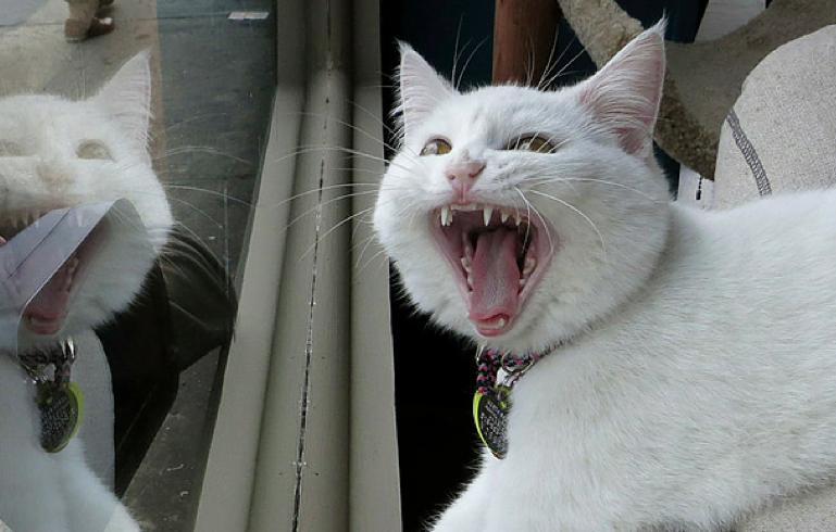 Топ-10 знаменитых котов 2015 года