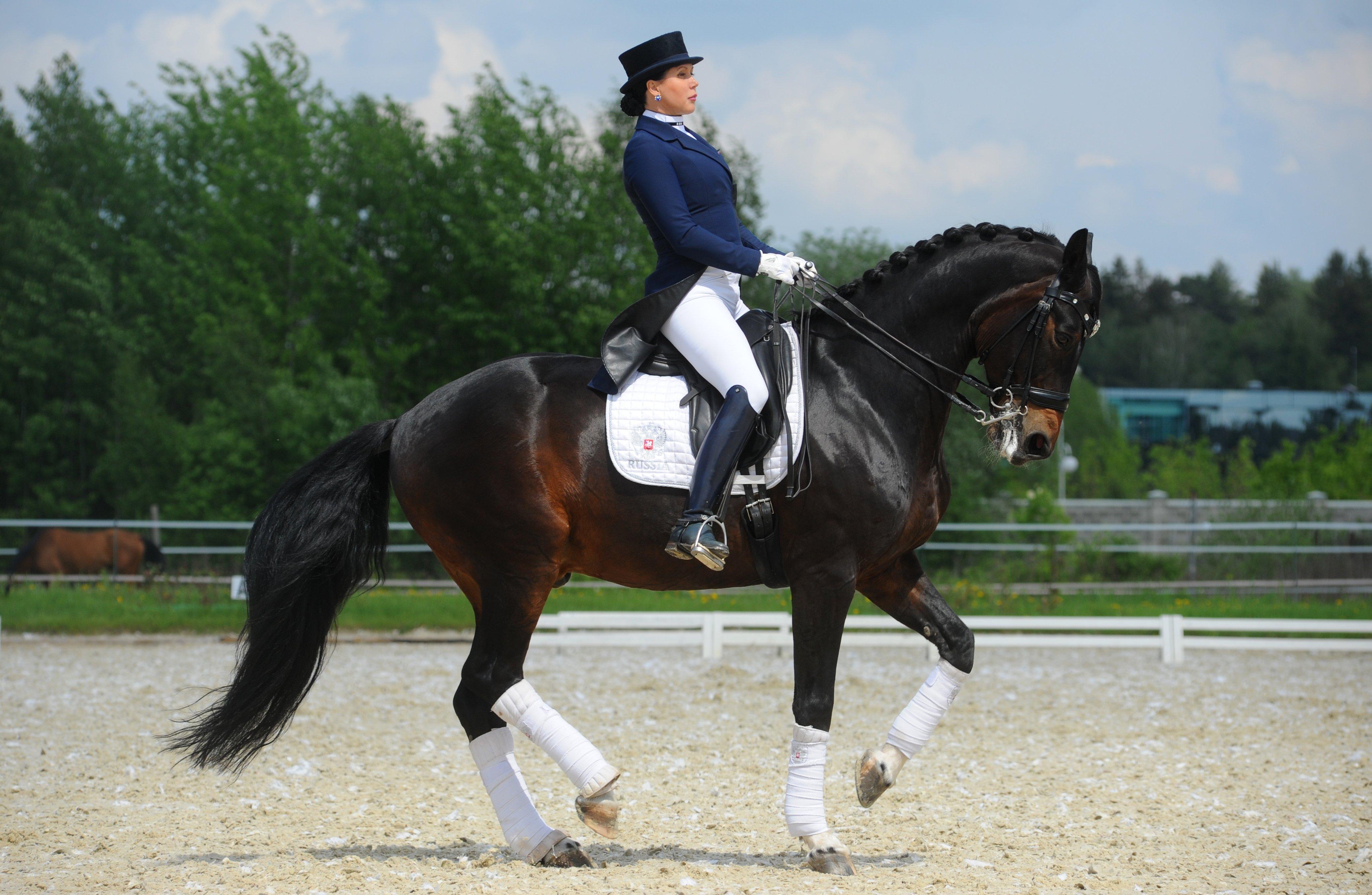 «Даже лошадь за €11 млн не гарантирует золотой медали Олимпиады»