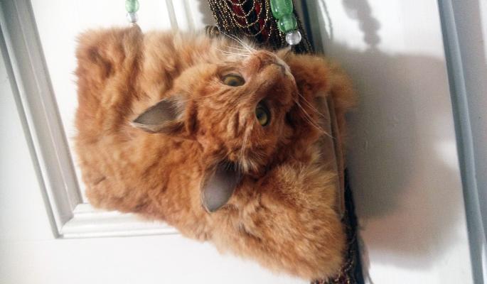 Клатч из кошки, возмутивший защитников животных, выставили на аукцион