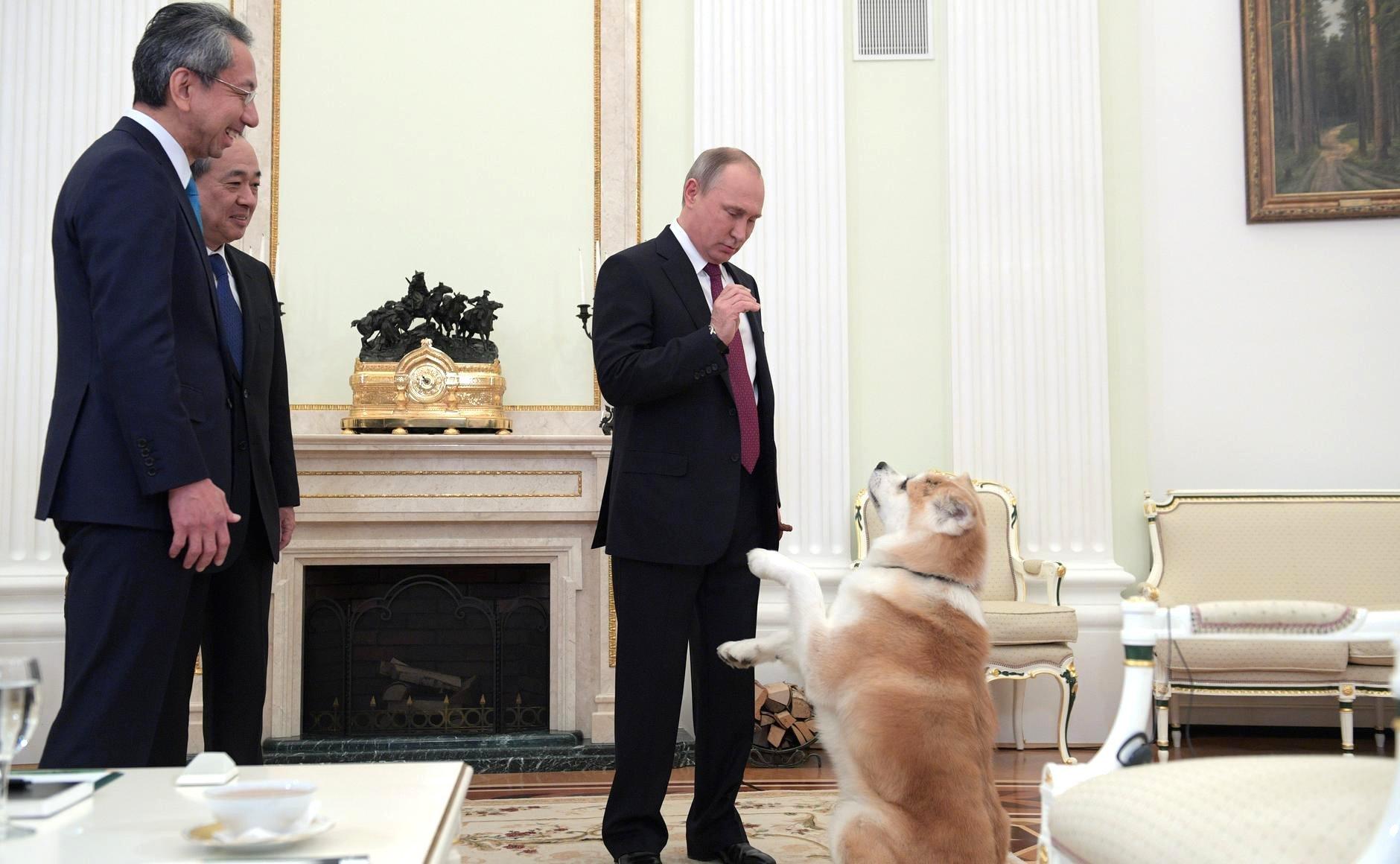 На интервью с японскими журналистами Путина сопровождала собака Юмэ