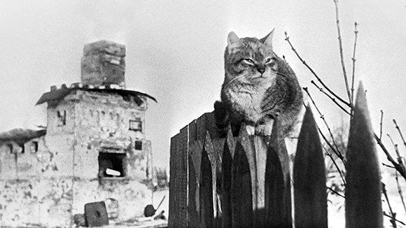 «Искра» жизни и надежды: как прорвали блокаду Ленинграда
