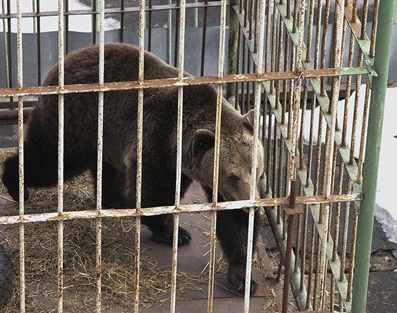 Медведя накормили, кур поделили