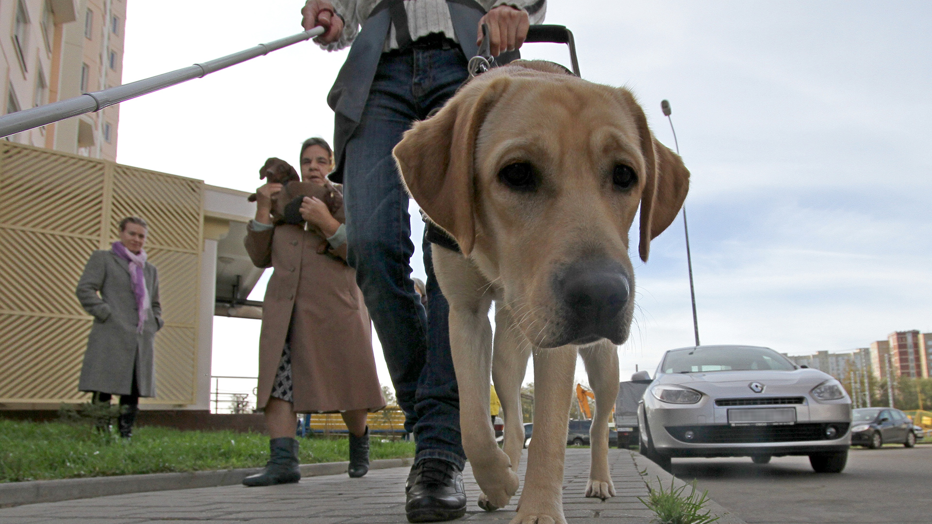Обои Собака, стойка, друг. Собаки foto 16