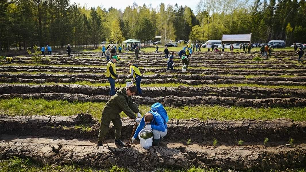 """Волонтеры сажают саженцы хвойных пород деревьев в рамках акции """"Всероссийский день посадки леса"""""""