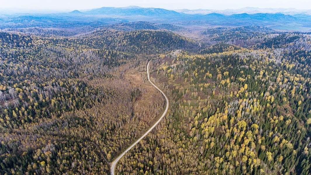 Леса в Чойском районе республики Алтай, вид сверху, дорога