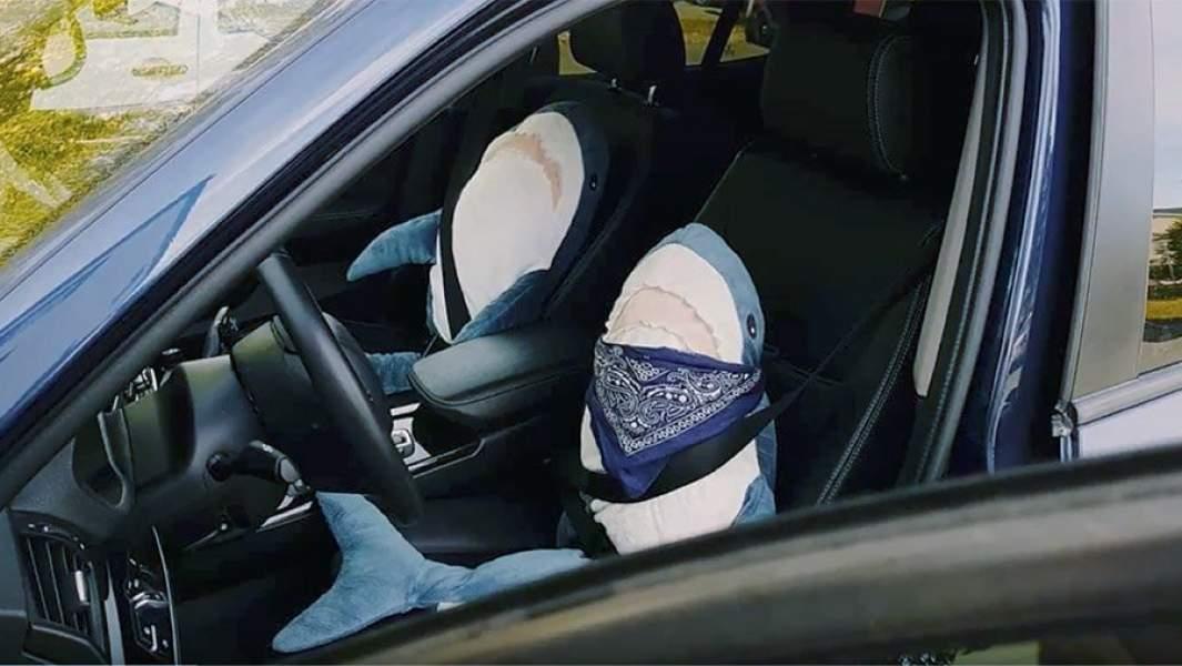 Плюшивые акуы сидят в автомобиле вместо водителя и пассажира