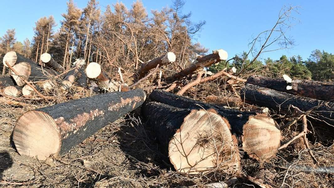 Делянка для заготовки дров