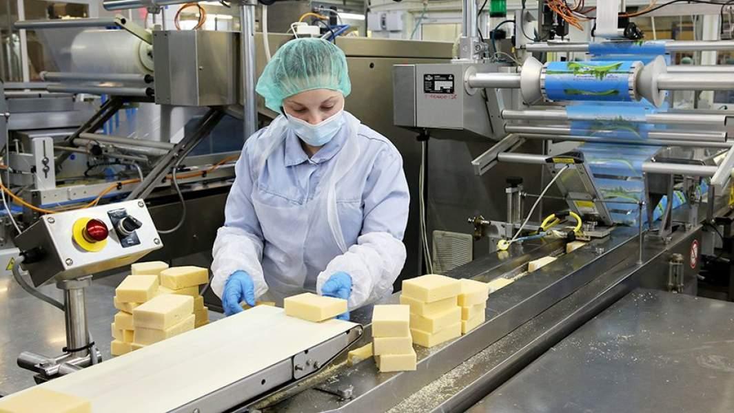 На заводе по производству сыра и сливочного масла группы компаний «Нева Милк»
