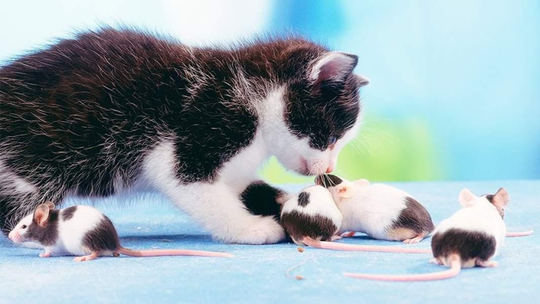 Котенок и мыши
