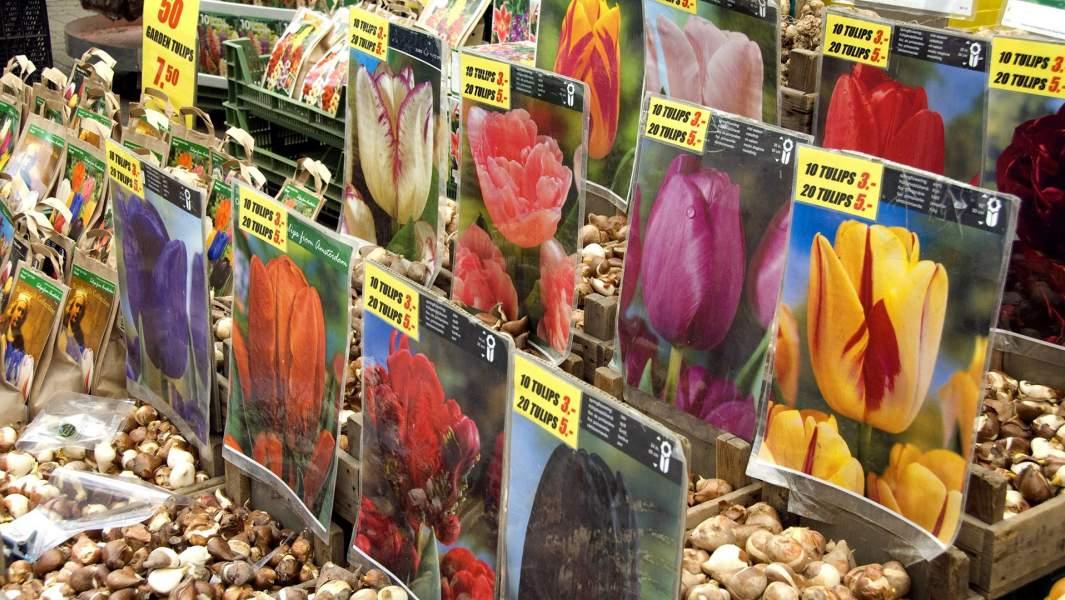 Цветочный рынокBloemenmarkt в Амстердаме
