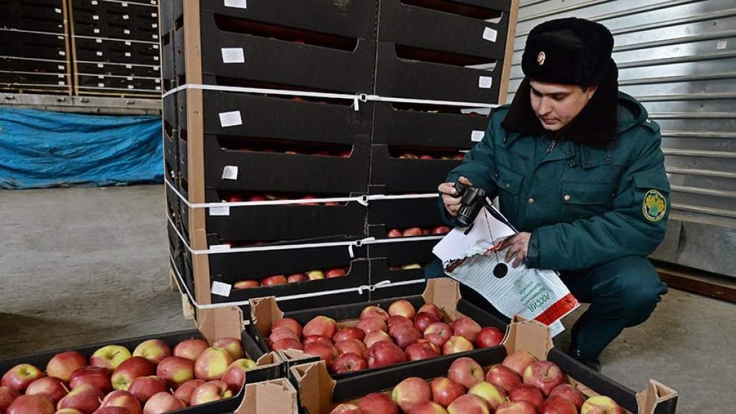 Сотрудник таможенной службы РФ осуществляет осмотр груза