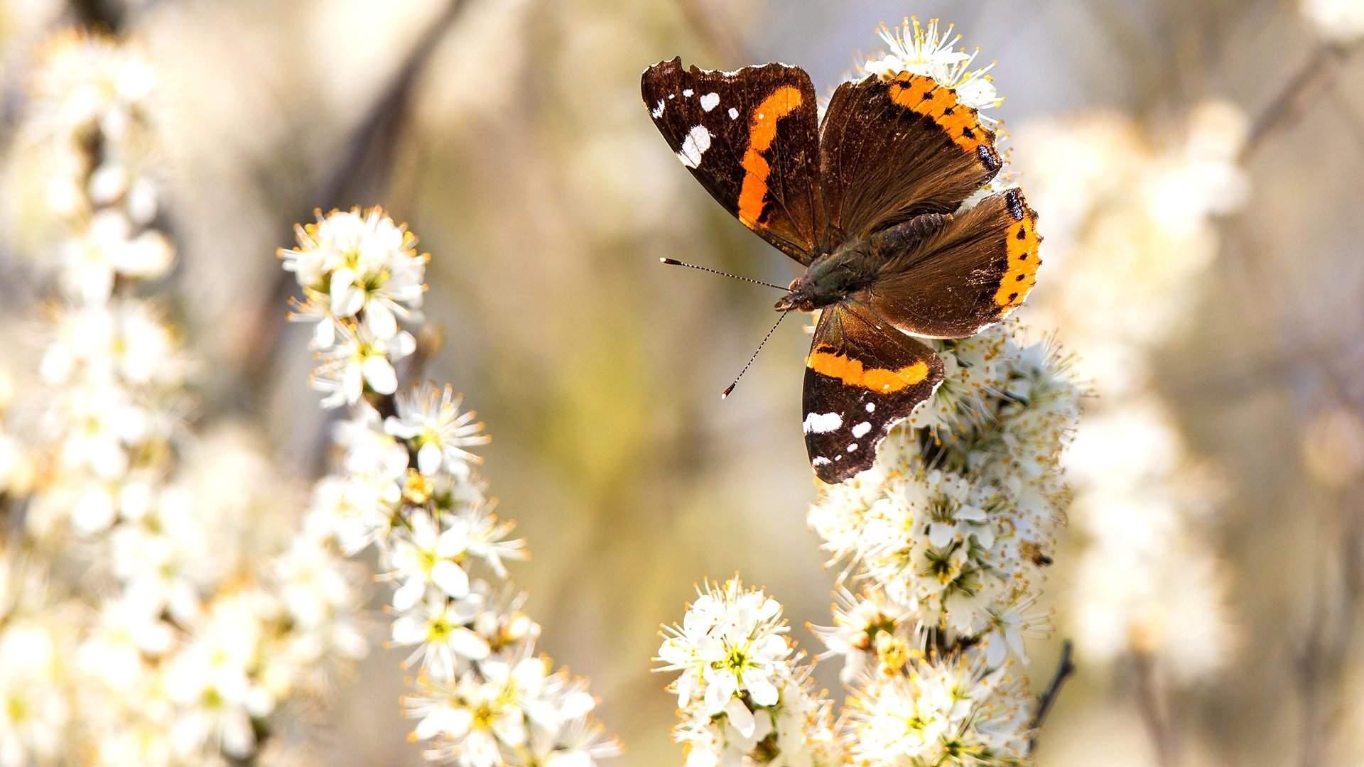 10 самых необычных и красивых бабочек в мире