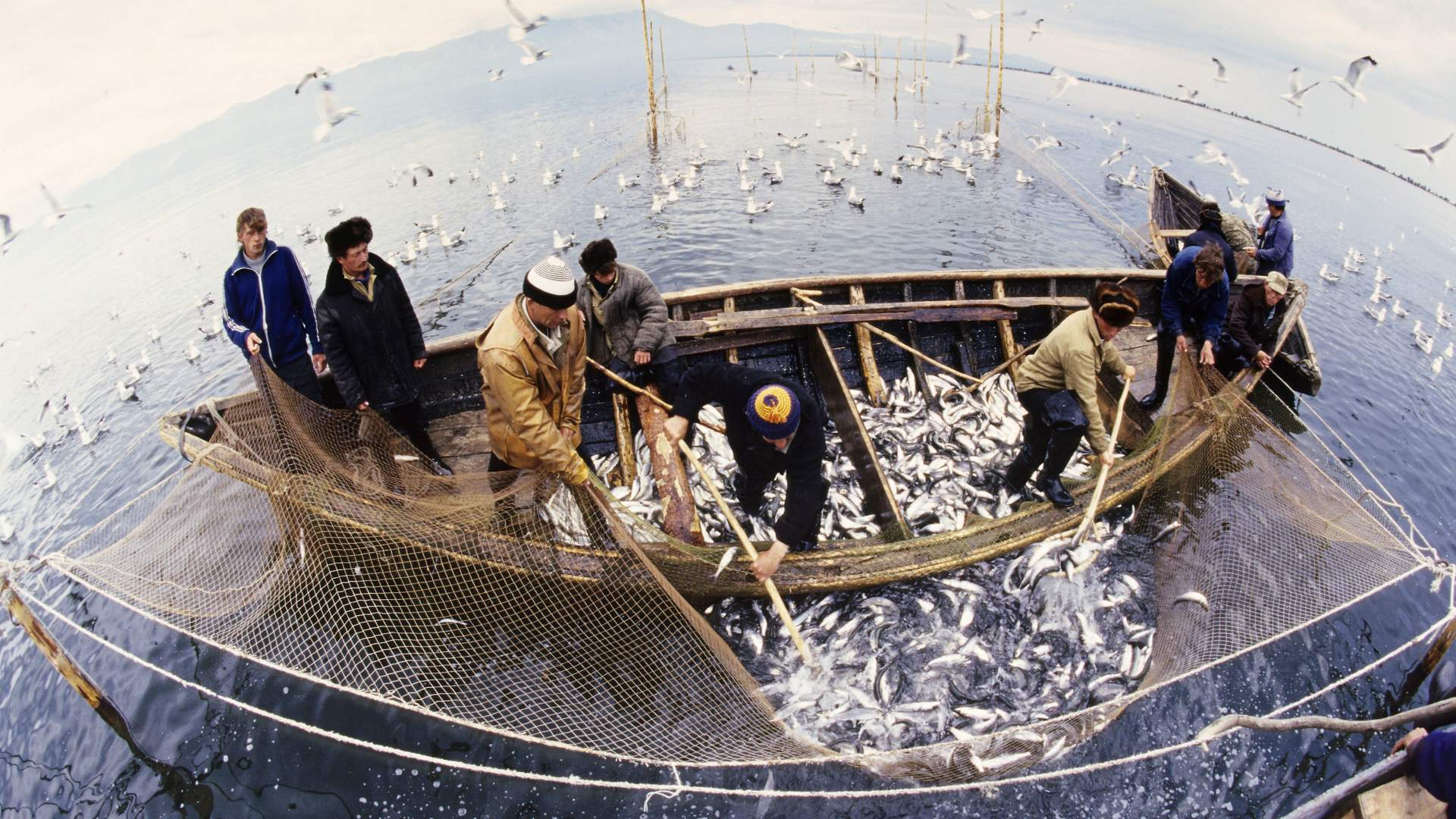 Ответственность за незаконный вылов рыбы могут ужесточить