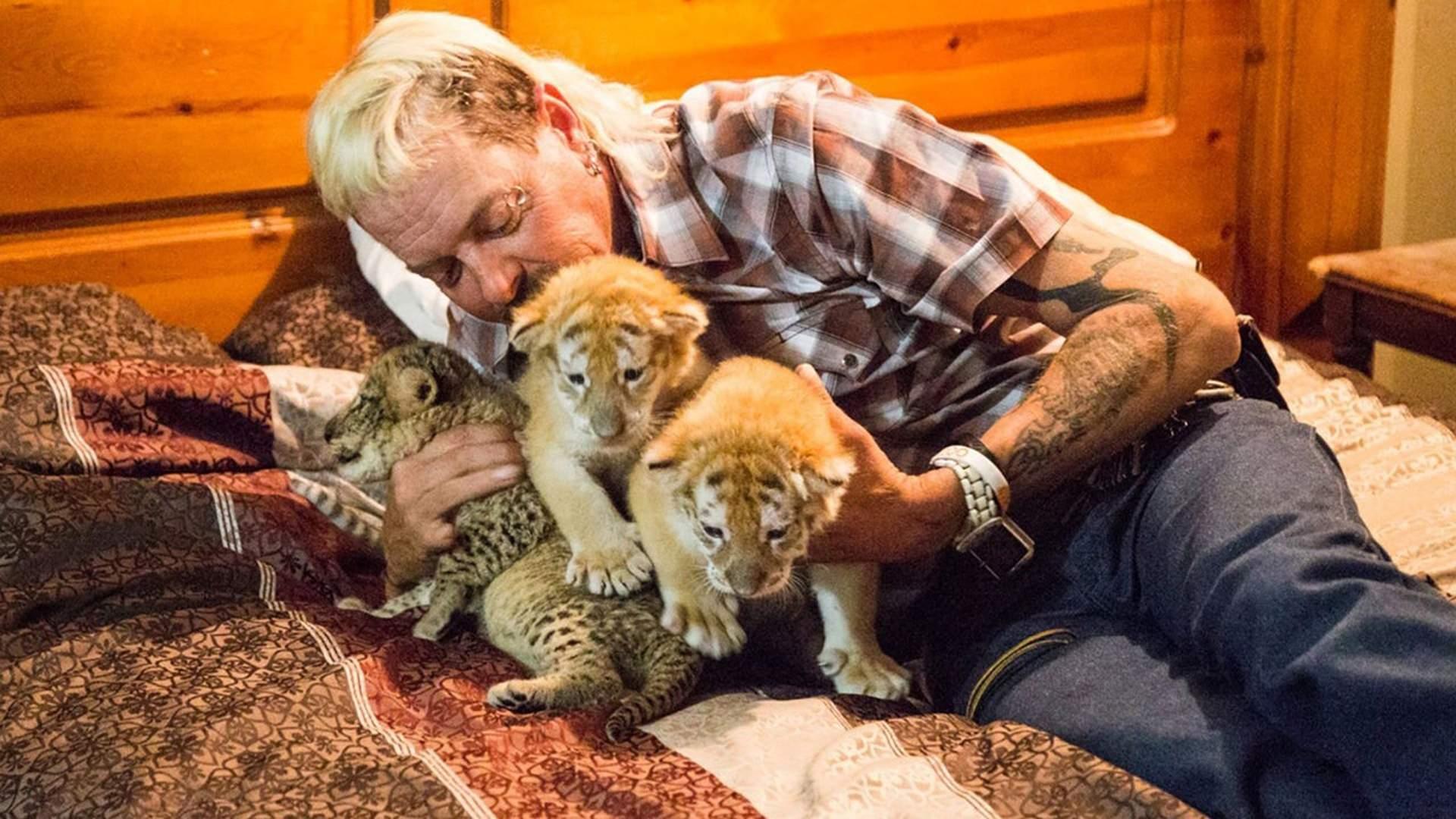 За 10 дней «Короля тигров» посмотрело более 34,3 миллиона зрителей