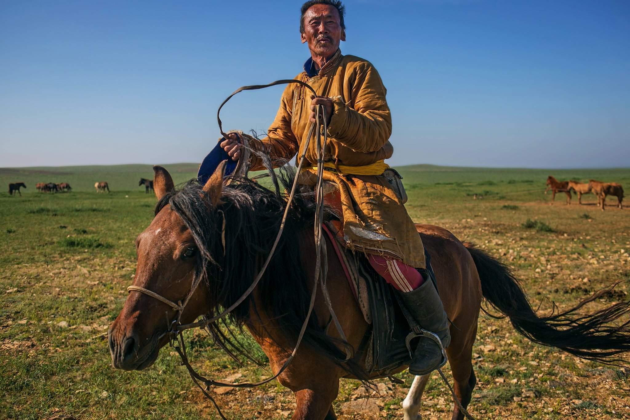 Хоол хийж амжихгүй дайны үед монголчууд мориныхоо хоолойг зүсэж, цусыг нь уугаад давхидаг байжээ.