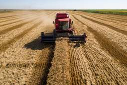 Уборка риса в Краснодарском крае